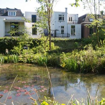 De tuinen in het Spijkerkwartier ontdekken